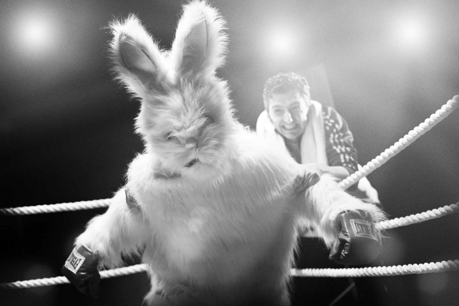 Raging Bunny in the boxing ring, starring Sean McGrath